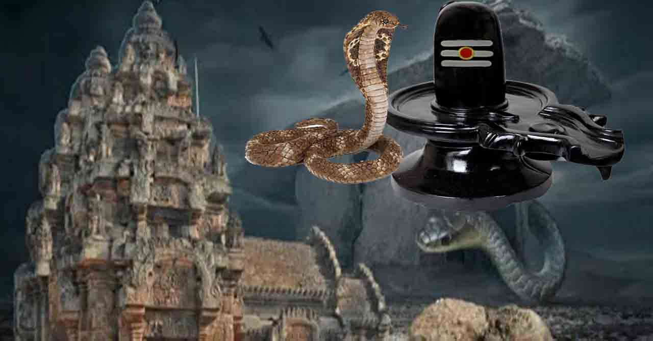 here snake is doing pooja