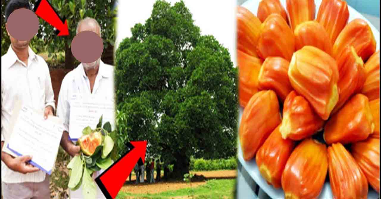 1 crore a year with a fruit tree .. How do you know ...