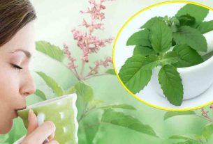 health benefits of eating tulasi